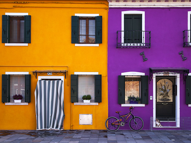 Dog sitting in front of the coloured houses on the island of Burano in the Venetian Lagoon
